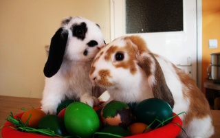 Rabbits and eggs wallpapers and stock photos