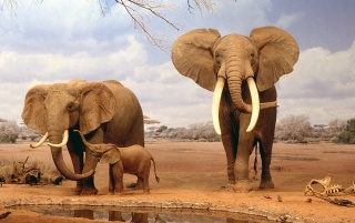 Elephants couple wallpapers and stock photos