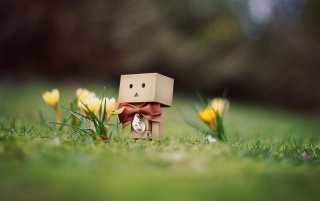Danbo March between flowers wallpapers and stock photos