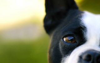 Dog's eye wallpapers and stock photos