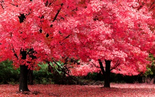 Pink trees wallpapers and stock photos