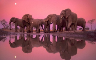 Elephant Party wallpapers and stock photos