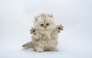 Defensiva gatito wallpapers and stock photos