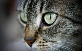 Eyes of the cat wallpapers and stock photos