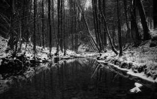 Winter in black and white wallpapers and stock photos