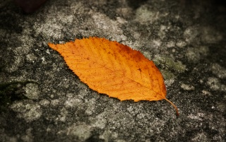 Fallen leaf wallpapers and stock photos