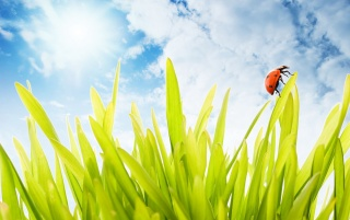 Ladybug on grass wallpapers and stock photos