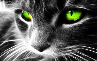 Random: Green eyes cat