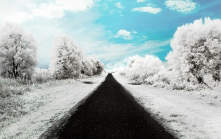 Random: Winter road