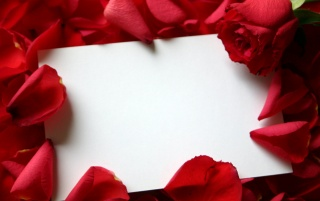 Roses and a letter wallpapers and stock photos
