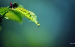 Drop and green wallpapers and stock photos