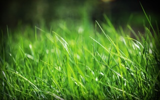 Just grass wallpapers and stock photos