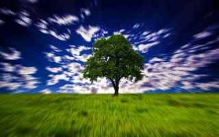 Hypno Tree wallpapers and stock photos