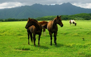 Caballo wallpapers and stock photos
