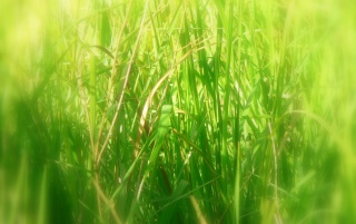 Long grass wallpapers and stock photos