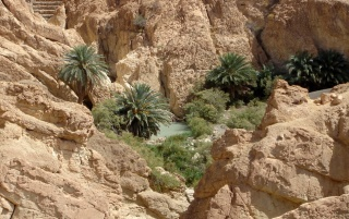 Sahara Oasis wallpapers and stock photos
