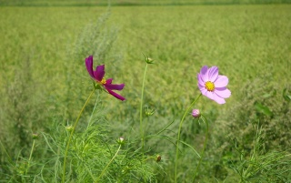 Random: CountrySide Flowers No.1