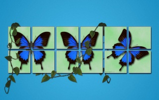 Spring blue butterfly wallpapers and stock photos