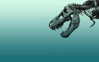 Skeleton Dinosaur wallpapers and stock photos