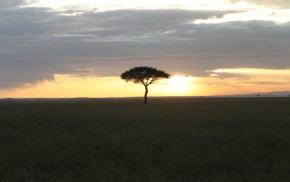 Africa wallpapers and stock photos