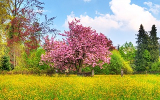 Beautiful Spring wallpapers and stock photos