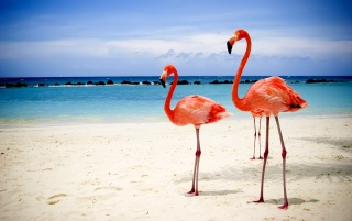 Flamingos wallpapers and stock photos