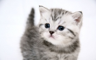 Small cute kitty wallpapers and stock photos