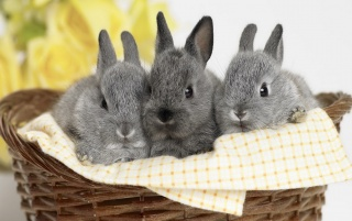 Rabbits wallpapers and stock photos