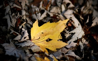 Herbst wallpapers and stock photos