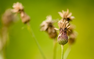 Burdock wallpapers and stock photos