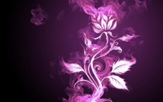 Violet_magenta_flower_1024x768 wallpapers and stock photos