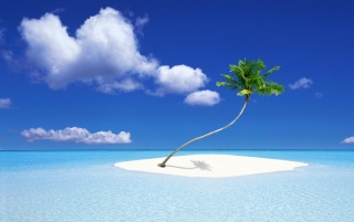 Palm Tree Island wallpapers and stock photos
