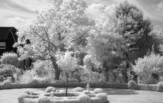 Infrared Tree in BW wallpapers and stock photos