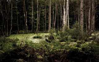 Dark Woods wallpapers and stock photos