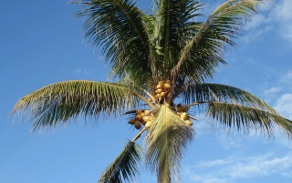 Palmtree wallpapers and stock photos