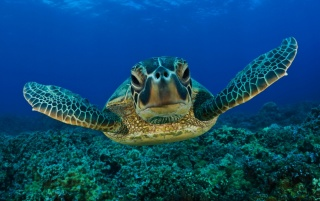 Turtle wallpapers and stock photos
