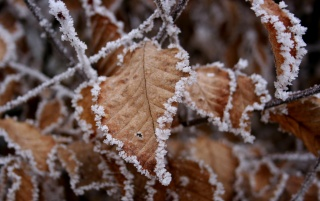 Frozen leaves wallpapers and stock photos