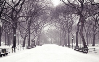 Winter in the park wallpapers and stock photos