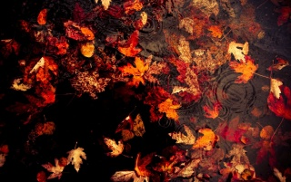 Floating Leaves wallpapers and stock photos