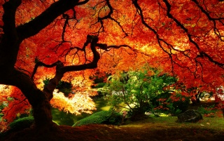 Maple in Autumn wallpapers and stock photos
