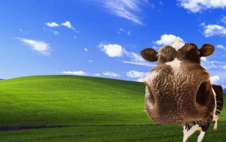 Cow bliss wallpapers and stock photos