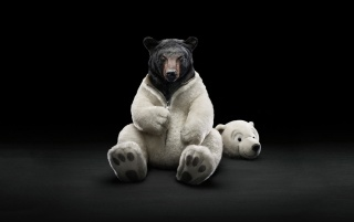 Dressed Bear wallpapers and stock photos