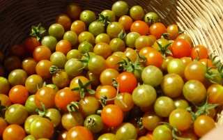 Los tomates wallpapers and stock photos