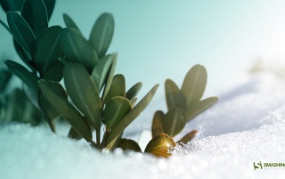Winter shrub wallpapers and stock photos