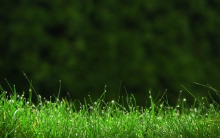 Grass Field wallpapers and stock photos