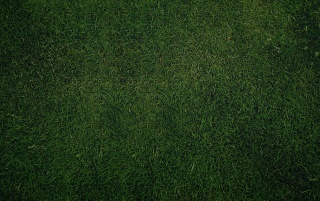 Grass wallpapers and stock photos