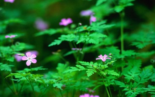 Forest flowers wallpapers and stock photos