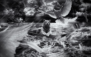 Tiger in Boat wallpapers and stock photos