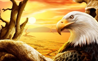 Bald eagle wallpapers and stock photos