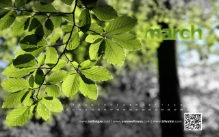 spring wallpaper wallpapers and stock photos